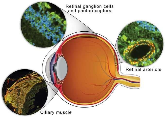 Gouttes oculaires CBD: une nouvelle frontière pour la douleur oculaire