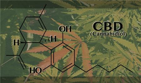 Le CBD efficace dans le traitement de la GVHD