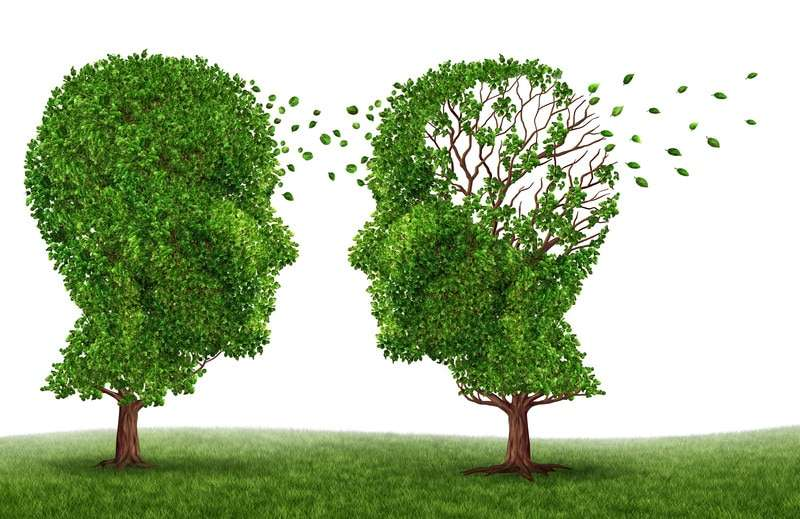 Le CBG : ses propriétés anti-inflammatoires et neuroprotectrices étudiées