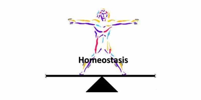 Homéostasie : trouver un équilibre interne, pour les combattants de MMA, mais aussi les autres sportifs