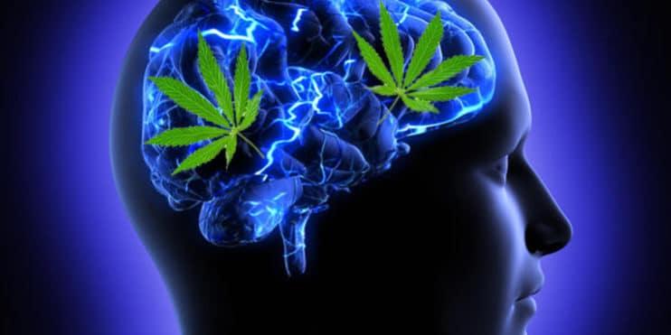 Le CBD semble augmenter la connectivité entre certaines régions du cerveau