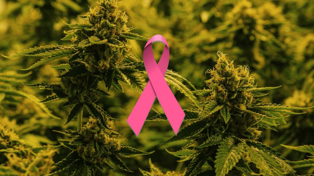 Les cannabinoïdes améliorent les effets du traitement contre le cancer