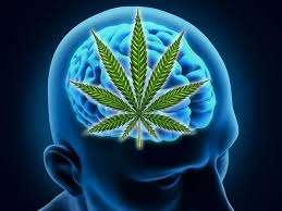 GW Pharmaceuticals : un brevet CBD:THC contre le cancer du cerveau
