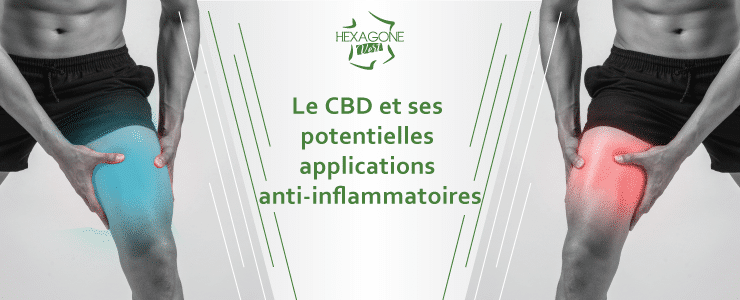 Le CBD et ses potentielles applications anti-inflammatoires