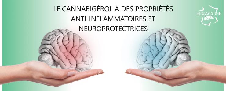 Le Cannabigérol à des propriétés anti-inflammatoires et neuroprotectrices