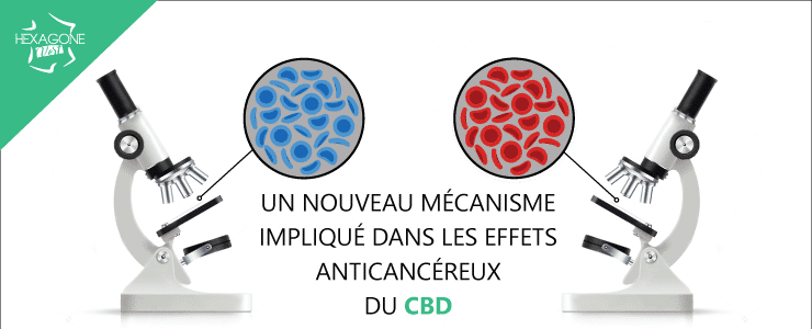 Un nouveau mécanisme impliqué dans les effets anticancéreux du CBD