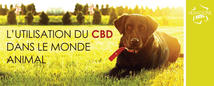 Le CBD prévient les comportements schizophréniques chez les animaux