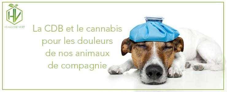 Le cbd et le cannabis pour les douleurs de nos animaux de compagnie
