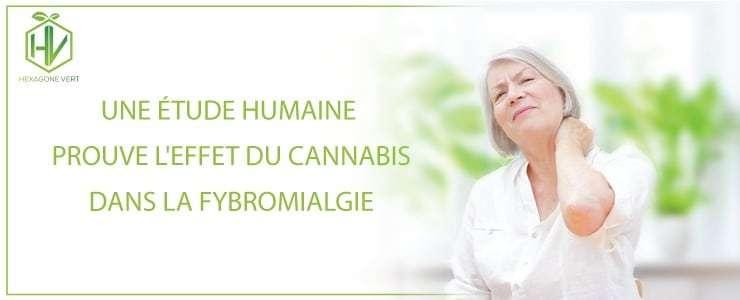 Une étude humaine prouve l'effet du cannabis dans la fibromyalgie