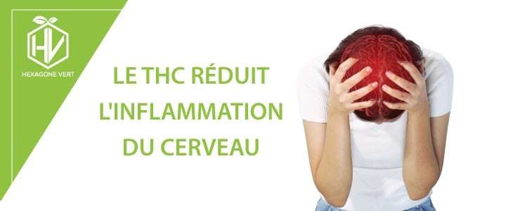 THC inflammation