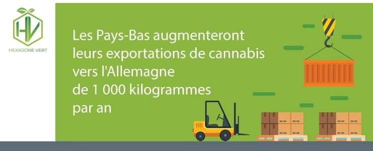 cannabis exportation