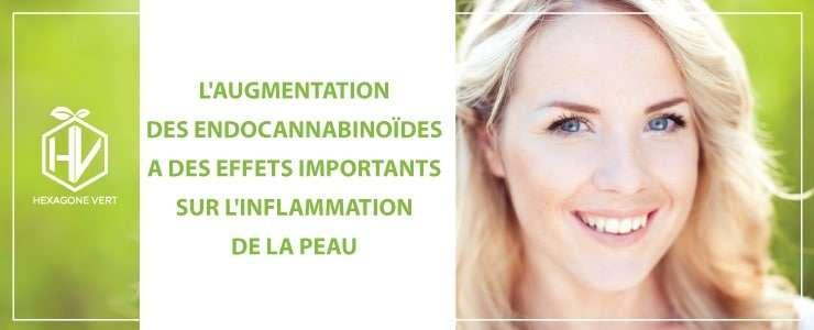 endocannabinoides peau