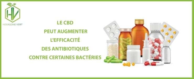 cbd antibiotiques