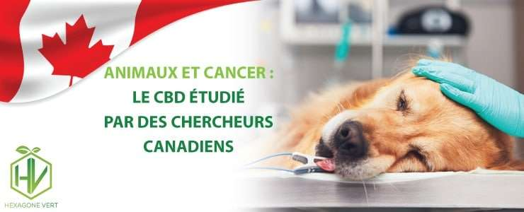 cbd cancer animaux