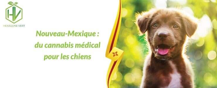 Nouveau-Mexique : du cannabis médical pour les chiens