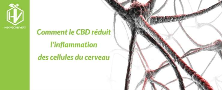 cbd inflammation cerveau