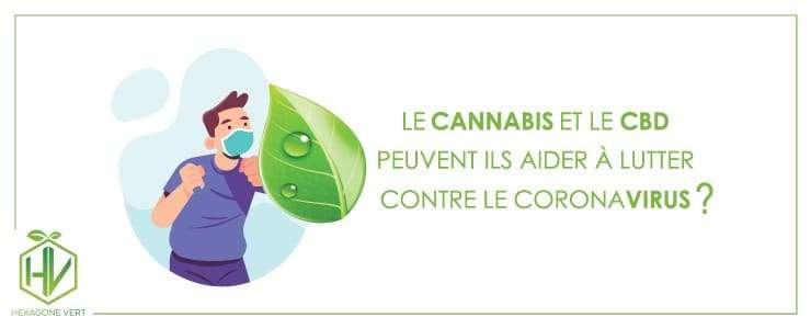 cannabis coronavirus