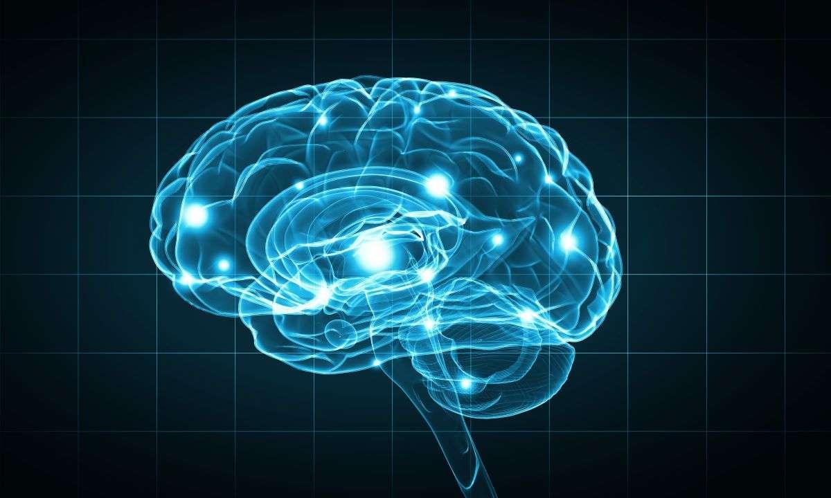 cbd cerveau