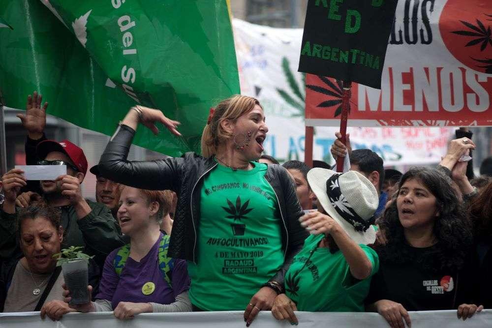 culture cannabis médical